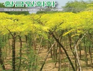 황금잎회화